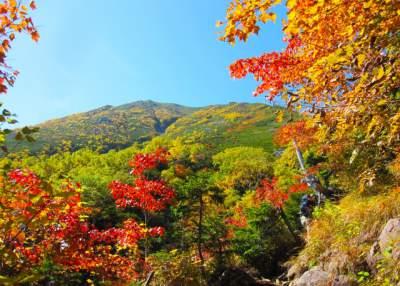 秋とアトピー