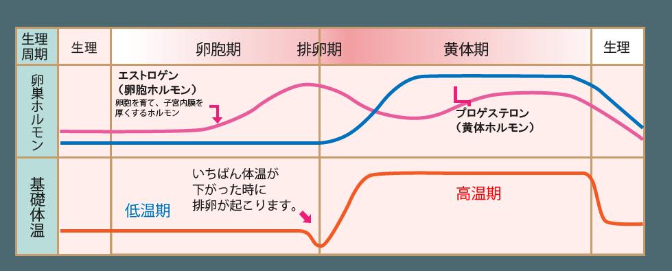 排卵日の基礎体温