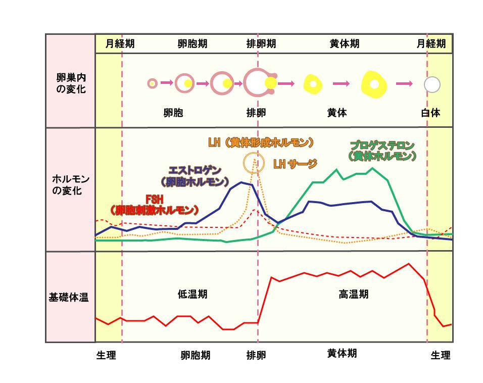 基礎瘀体温表