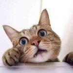 猫のおやつイメージ